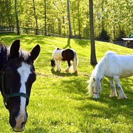 Good boundaries and horse sense
